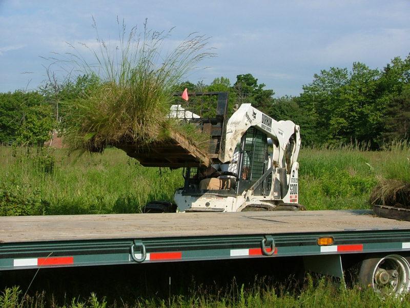 Plant Salvage